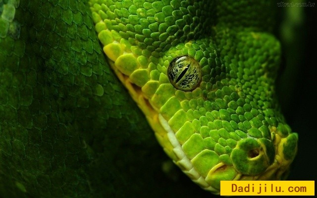 beauty-of-snakes3.jpg