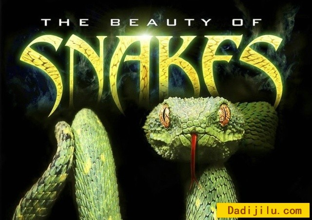 beauty-of-snakes2.jpg
