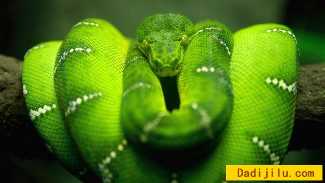 beauty-of-snakes4.jpg